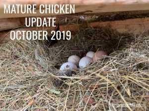 Mature Chicken Update 10.16 IMG MAIN