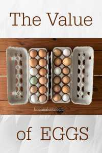Brianna Lentz Eggs are Important 2 copy
